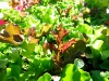 Cage Free Organic Salad Greens Grown at Altitude