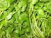 Fresh Creasy Greens from Virginia Farm Stand