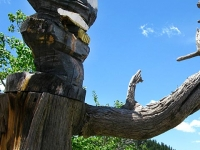 Bald Eagle Chainsaw Carving Red Feather Lakes, CO