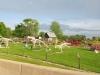 Indiana Farm Art Yard Sculpture