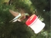 DIY Hummingbird Feedeer