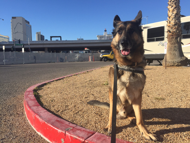 Dogs hate concrete camping in Vegas
