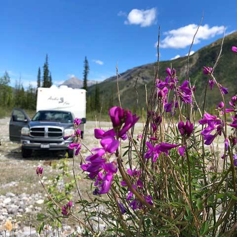 BC Wildflowers