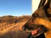 Wyatt out window in Sedona, Arizona