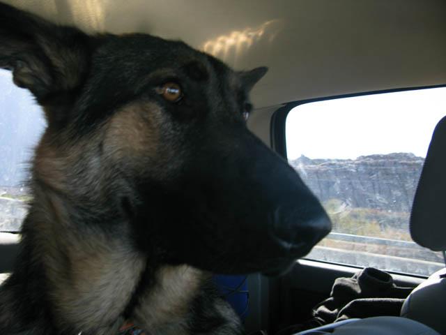 Wyatt Ray German Shepherd Full-time RVing Dog