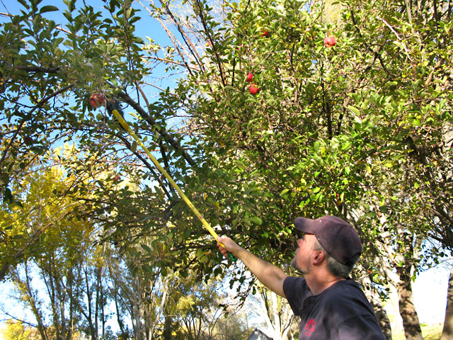 Picking Apples at Big Bend RV Park Fernley, NV