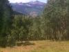 Upper Vickers Ranch