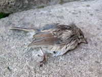 Dead Bird at Vickers Ranch