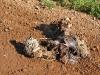 Smelly Colorado County Road Mystery Roadkill