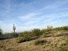 Roadside Cacti in Arizona