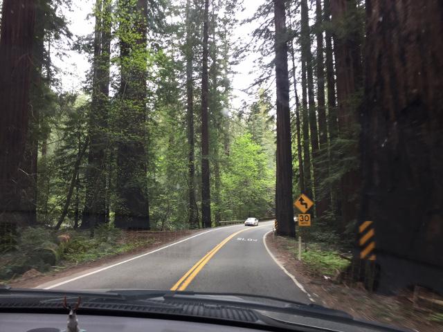 Humboldt County RVing Redwoods