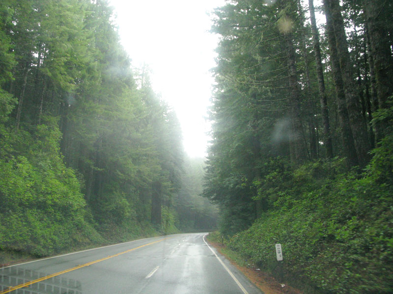 Humboldt County Magic Redwood Trees Highway 101