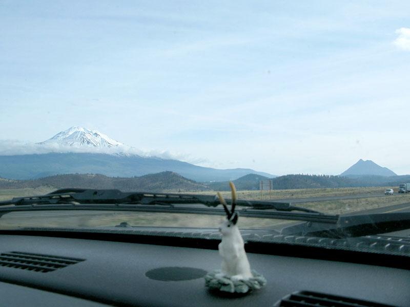 Mt. Shasta Dashboard Jackalope