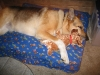 Jerry loving his new tripawd dog. Thanks Bob!