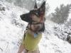 Wyatt in the Snow
