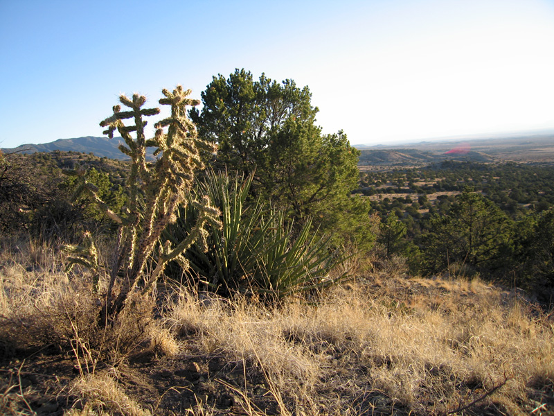 Cactus Lincoln National Forest New Mexico