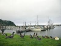 Winchester Bay, Oregon