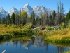 Grand Tetons reflected by beaver dam pond