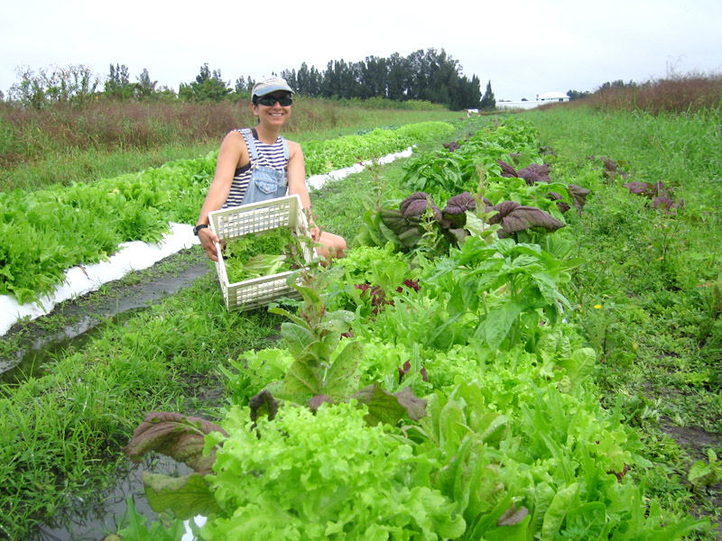 organic farm workamping job