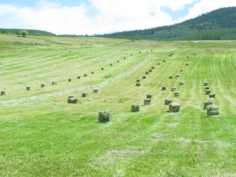Rocky Mountain Hay Meadow at Vickers Ranch