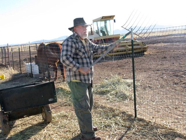 Al feeding horses workamping at New Arizona ranch