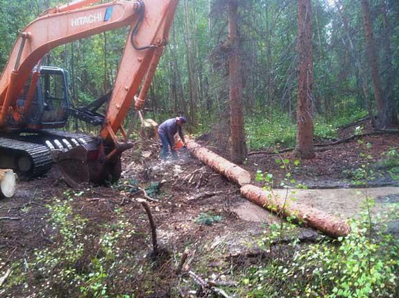 Upper Ranch Logging