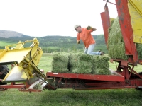 Jim ties bales on the stacker while haying at Vickers Ranch