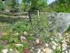 Rne watering the Vickers flower garden