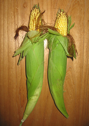 don't eat the feed corn