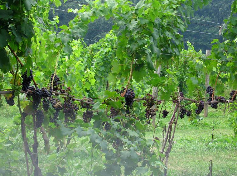 Wingate winery, Smicksburg PA