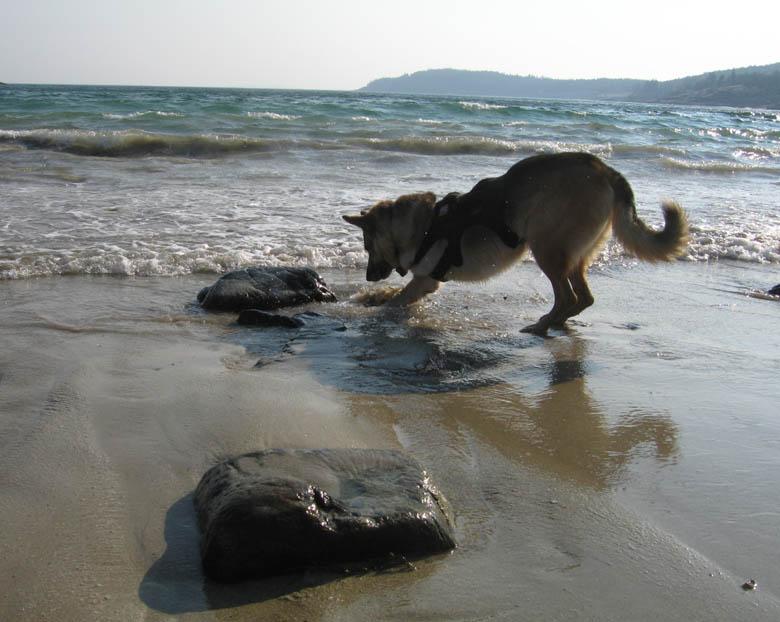 Tripod Swims in the Atlantic Ocean