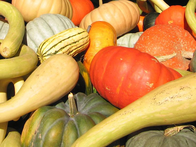 Vermont Farmers Market Squash