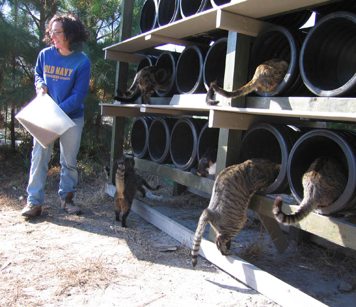 Workamping at Safe Harbor Animal Rescue Maysville North Carolina