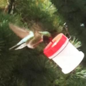 DIY hummingbird feeder for RVers