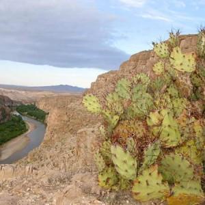 Big-Bend-Rio-Grande-Overlook-Cacti